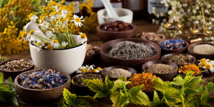 Discover How to Grow a Personalized Herbal Pharmacy